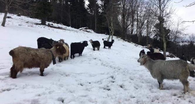 Emet'te 9 köye küçükbaş hayvan giriş çıkışı yasaklandı
