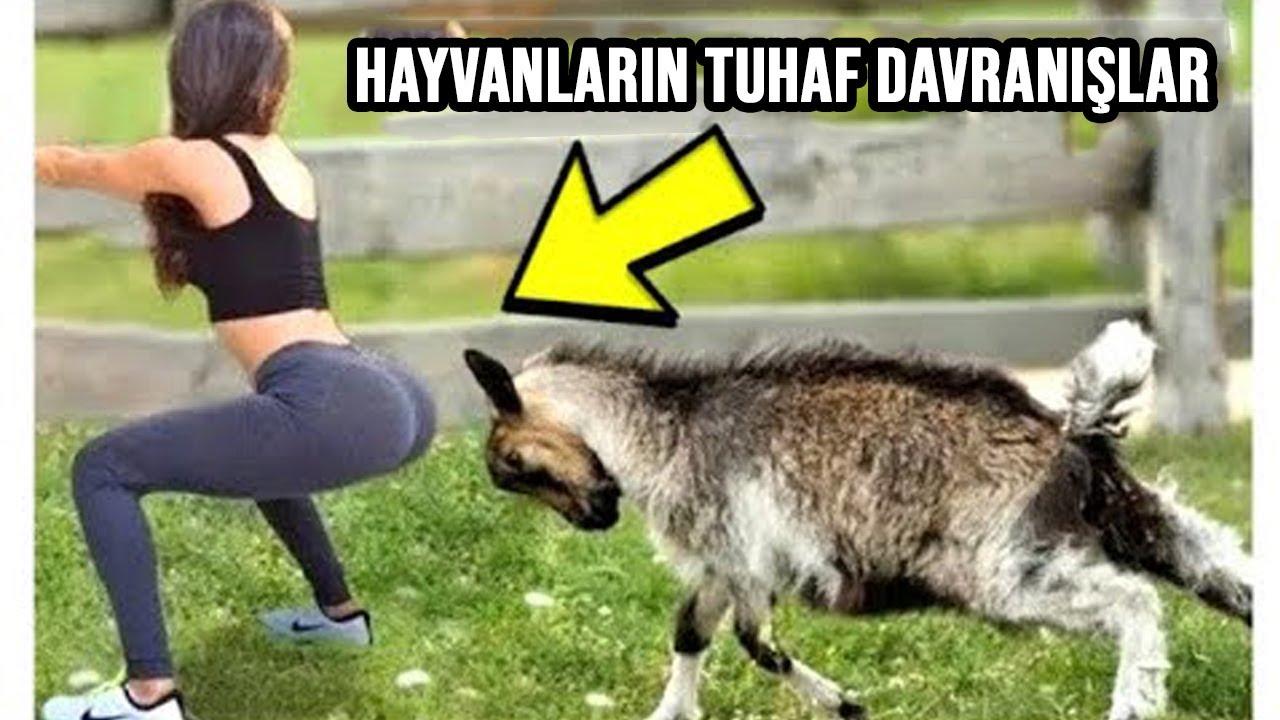 Hayvanların Bu Tuhaf Davranışlarını Görünce Onları Daha İyi Anlayacaksınız