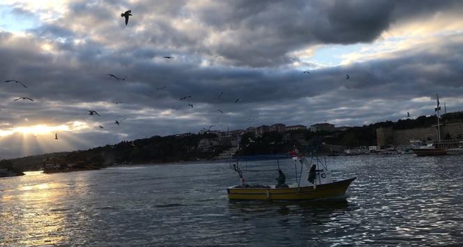 Balıkçı teknelerinin davetsiz misafiri martılar
