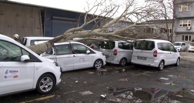 Şiddetli fırtına dev ağacı kökünden söktü, 3 araçta ağır hasar meydana geldi