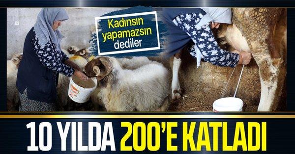Gaziantep'te 'kadınsın yapamazsın' diyenlere inat 10 yılda hayvan sayısını 200'e katladı